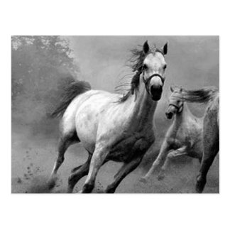 Pferdebetrieb Postkarte