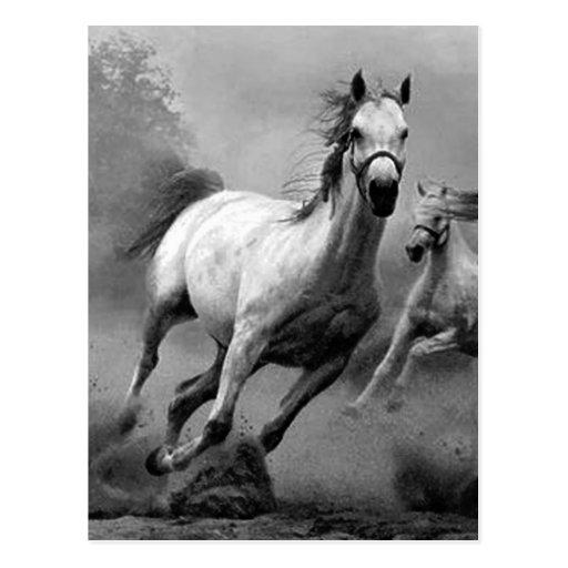 Pferdebetrieb Postkarten