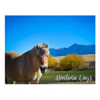 Pferdeblauer Himmel und Montana-Berge Postkarte