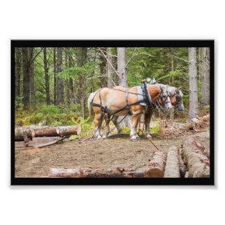 Pferdedas ziehen meldet Holz von Maine an Fotodruck