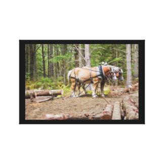 Pferdedas ziehen meldet Holz von Maine an Leinwanddruck