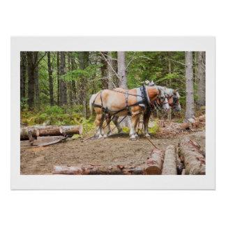 Pferdedas ziehen meldet Holz von Maine an Poster