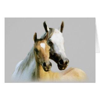 Pferdefreund-Karte Grußkarte