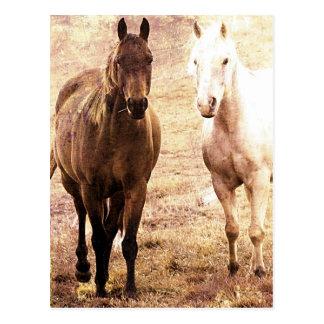 PferdefreundeSepia Postkarte