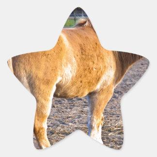 Pferdekoppel im Herbstlicht Stern-Aufkleber