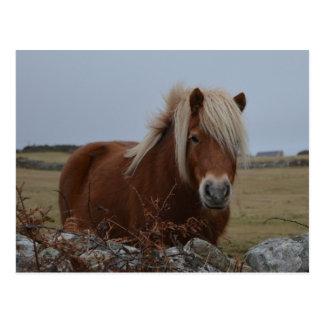 Pferdekunst-Druck-Postkarte Postkarte