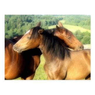 Pferdekuß Postkarte