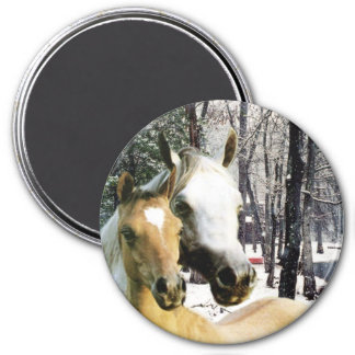 Pferdemagnet Magnete