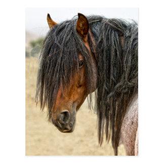 Pferdemähne Postkarte