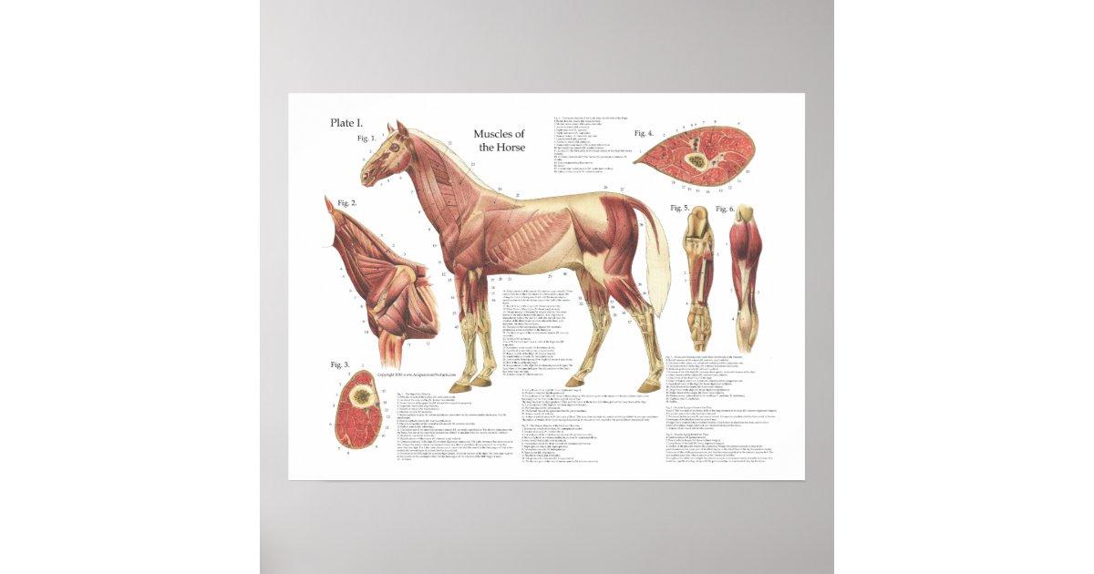 Groß Pferde Anatomie Diagramm Ideen - Menschliche Anatomie Bilder ...