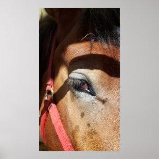 Pferdenahaufnahme an Rockton Weltausstellung Poster
