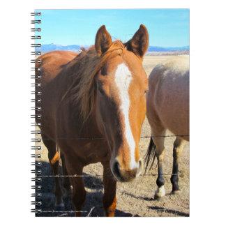 Pferdenotizbuch Spiral Notizblock