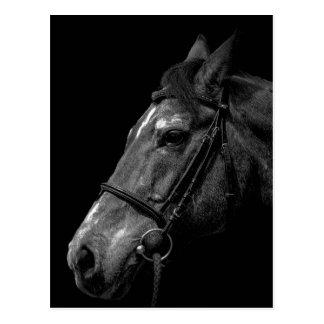 Pferdeporträt - Postkarte