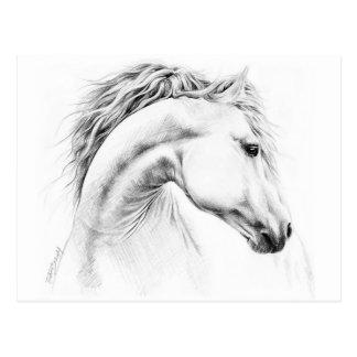 Pferdeporträtbleistift, der Postkarte zeichnet