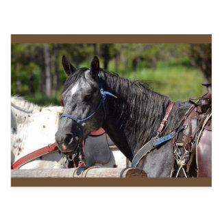 Pferdepostkarte, Hinterpferd Postkarte