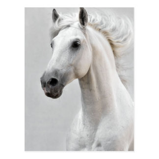 Pferdepostkarte Postkarte