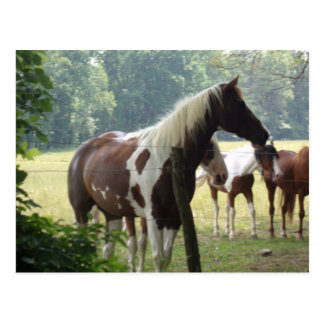 Pferdepostkarten Postkarte