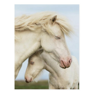 Pferdesammlung Postkarte