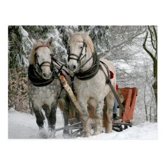 Pferdeschlitten-Fahrt Postkarte