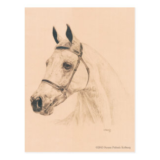 Pferdeskizze durch Susan Pelisek Kolberg Postkarte