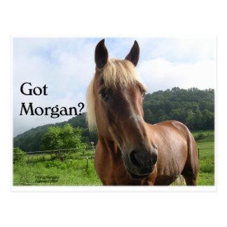PferdeSpaß: Erhaltenes Morgan? Postkarte