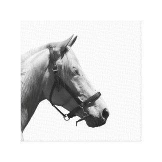 PferdetierreiterFoto Schwarzweiss Leinwanddruck