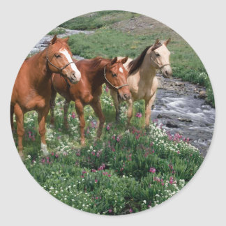 Pferdetrio-Aufkleber Runder Aufkleber