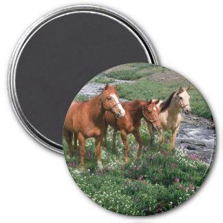 Pferdetrio-Magnet Runder Magnet 7,6 Cm