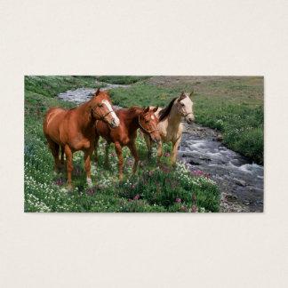 Pferdetrio-Visitenkarte Visitenkarten