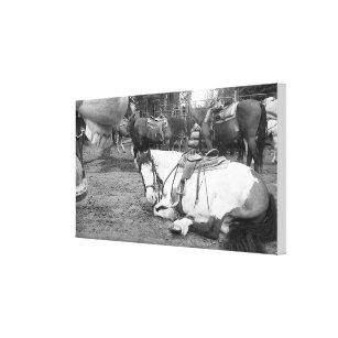 Pferdewand-Kunst Schwarzweiss-Photobomber Leinwanddruck