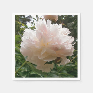 Pfingstrose. Blume Serviette