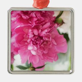 Pfingstrosen-Blumen-Nahaufnahme-Skizze Quadratisches Silberfarbenes Ornament