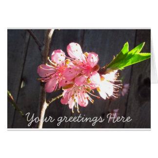 Pfirsich-Baum-Blüte Karte