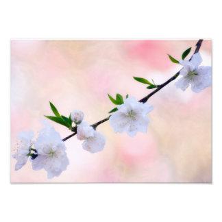Pfirsich-Blüte Fotodruck