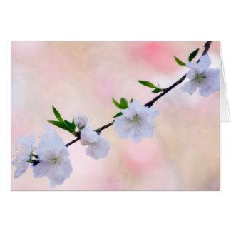 Pfirsich-Blüte Grußkarte