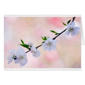 Pfirsich-Blüte Karte
