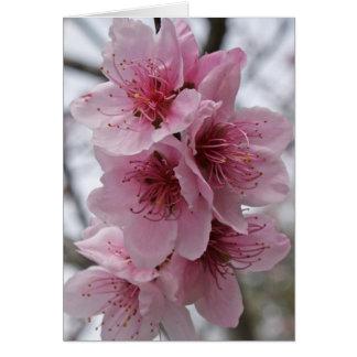 Pfirsich-Blüten Karte