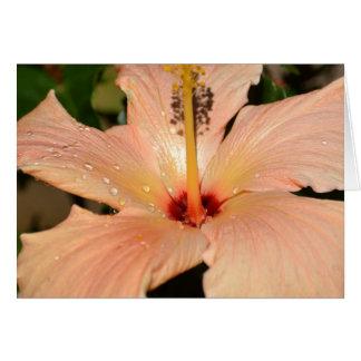Pfirsich-Hibiskus-Blume Karte