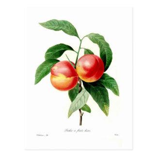 Pfirsich Postkarte
