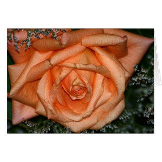 Pfirsich-Rose Karte