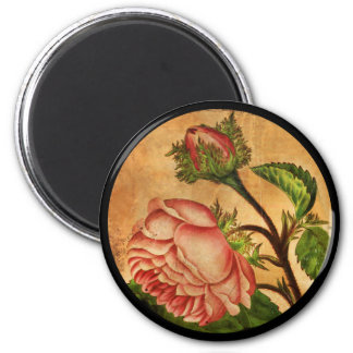 Pfirsich-Rosen-botanisches Bild Runder Magnet 5,1 Cm