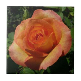 Pfirsich-Rosen-orange Blumen Fliese