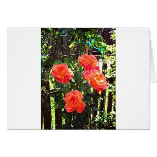 Pfirsich roses#1 karte
