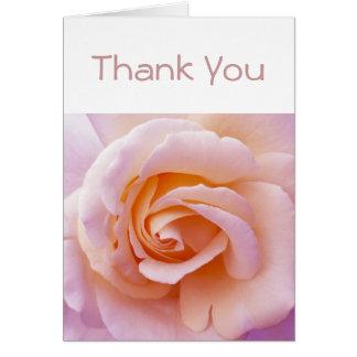 Pfirsich-und Rosa-englische Garten-Rose Karte