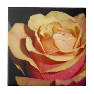 Pfirsichfarbene Rote Rose Fliese