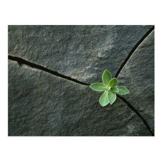 Pflanze, die in gebrochenem Boulder wächst Postkarte