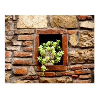 Pflanze in der Wand Postkarte