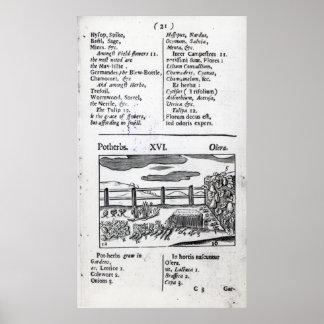 Pflanzen-Ackerbau von 'Orbis Sensualism pictus Poster
