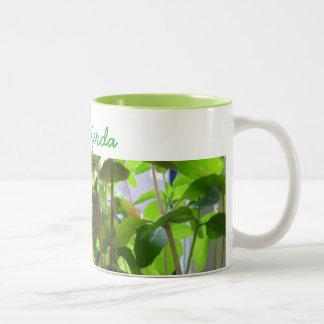 Pflanzen behalten wachsende Samen mit Namen Zweifarbige Tasse