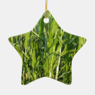 Pflanzen des grünen Mais wachsen im Sommer Keramik Ornament